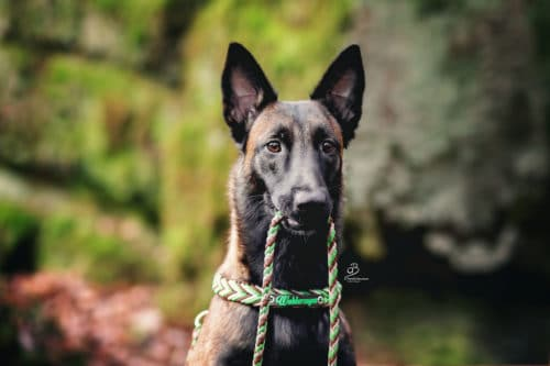 Hundeschule Elementar Hundeschule und Hundeerziehung in Waldenbuch und Steinenbronn