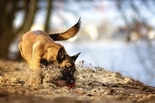 Beschäftigung für Hunde in der Hundeschule Elementar in Waldenbuch und Steinenbronn