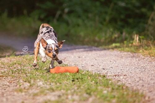 Beschäftigung für Hunde in der Hundeschule Steinenbronn