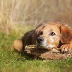 Hund Hundeerziehung in der Hundeschule Elementar in Steinenbronn, Böblingen und Umgebung