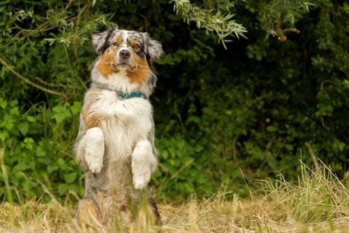 Wohlerzogener Hund in der Hundeschule Steinenbronn