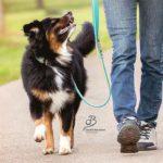 Wohlerzogen durch den Alltag Hundeschule Elementar in Steinenbronn