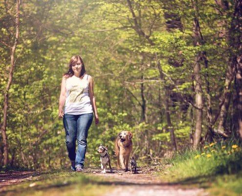 Hundeschule Gassi mit Hund Social Walk