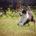 Welpe in der Hundeschule Elementar in Steinenbronn