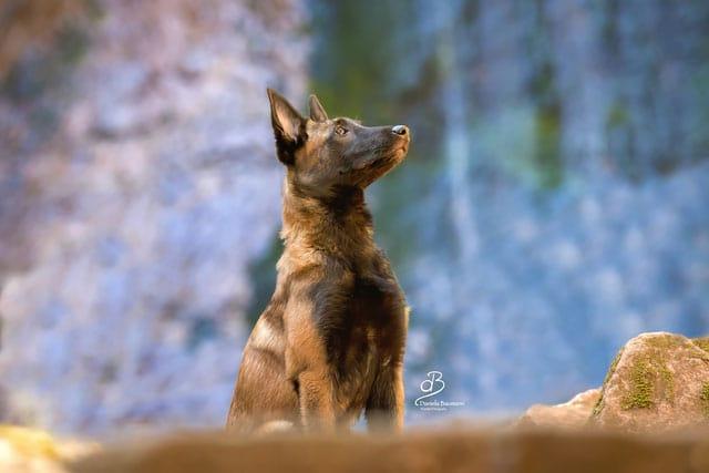 Junghunde Kurs Hundeschule Steinenbronn
