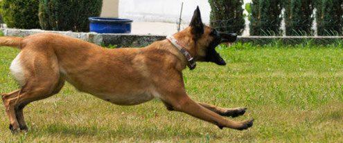 Verhaltensauffällige Hunde Problemhunde Hundeschule