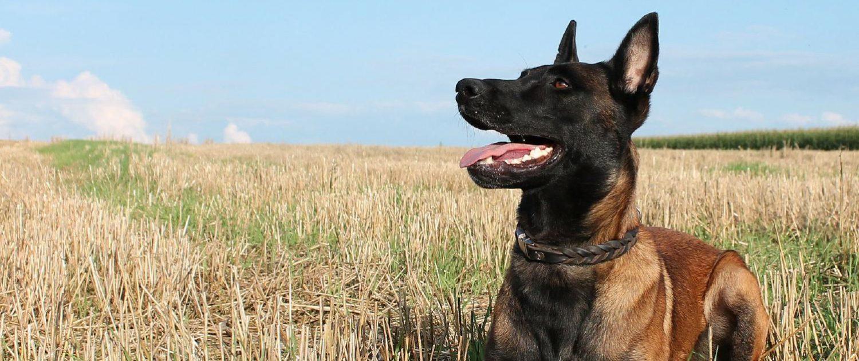 Hund im Training in der Hundeschule Elementar