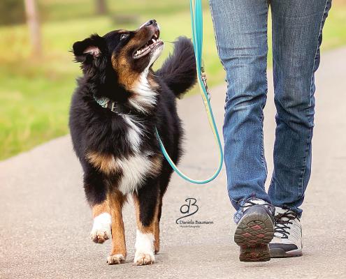 Trainingsmethoden im Hundetraining
