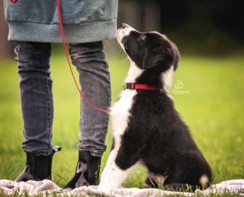 Welpe Welpenkurs Hundeschule in Steinenbronn